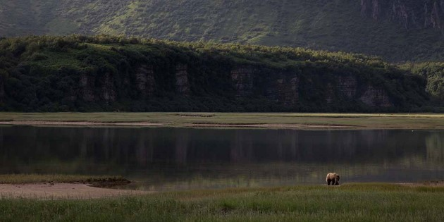 Bears foraging at Katmai National Park´s Valley of Ten Thousand Smokes