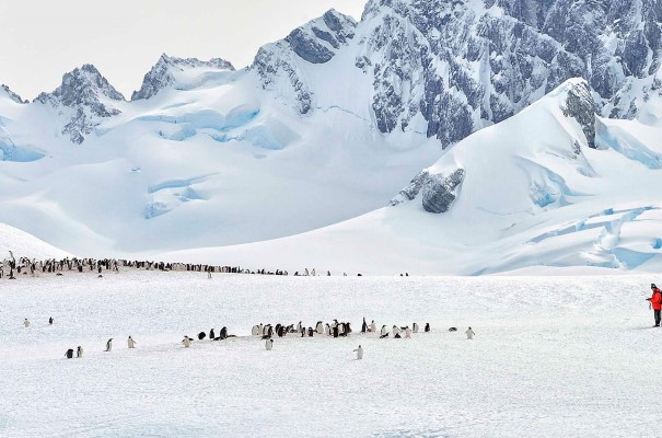 Among penguins on Cuverville Island