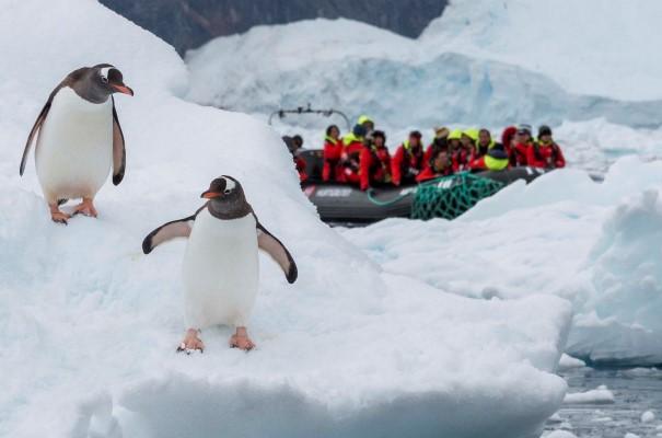 Excursion to meet penguins in Neko Harbour.
