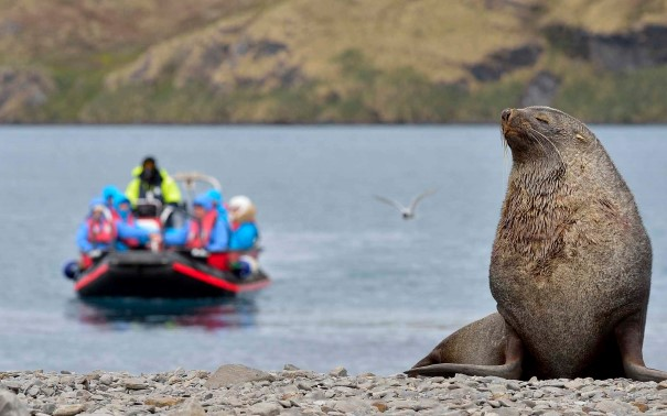 Guests in explorer boats getting close to an Antarctic Fur Seal.