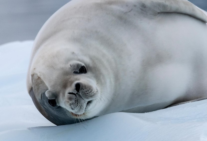A close up of a seal