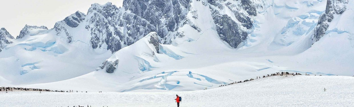 Man in middle of penguin colony in vast antarctic landscape