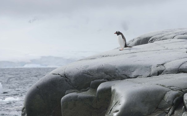 A lone penguin on the cliffs of Damoy Point