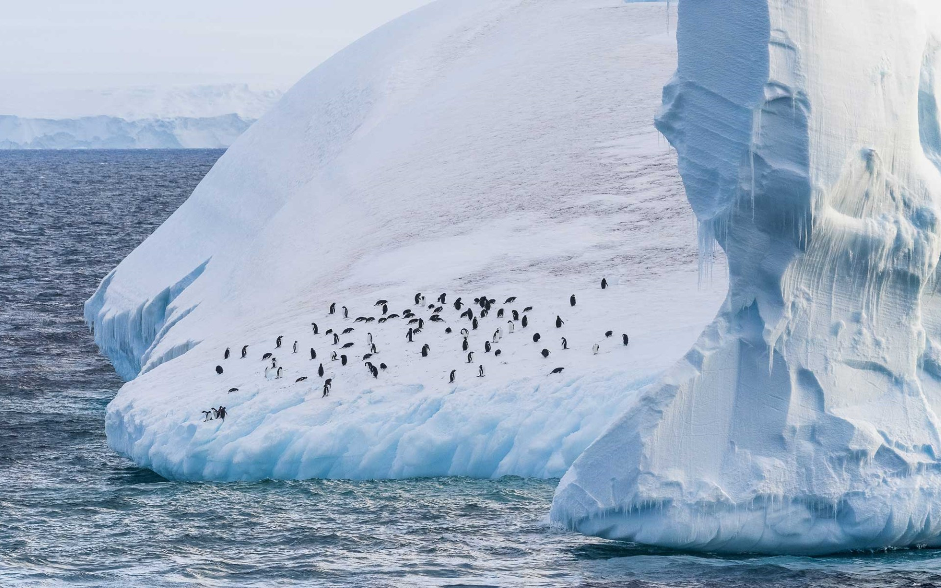 Penguins on a giant iceberg in the Antarctic sound