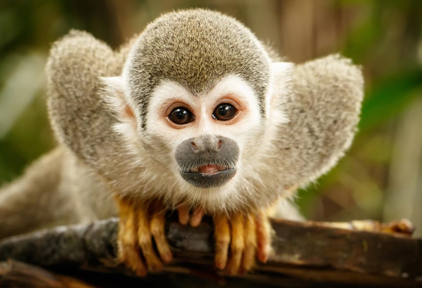 A close up of a monkey