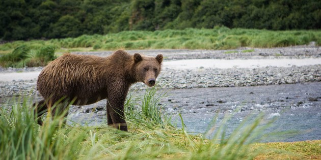 Day 10_Geographic Harbour_Katmai National Park and Preserve_1200x600.jpg